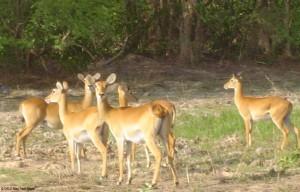 Mole_National_Park-Ghana